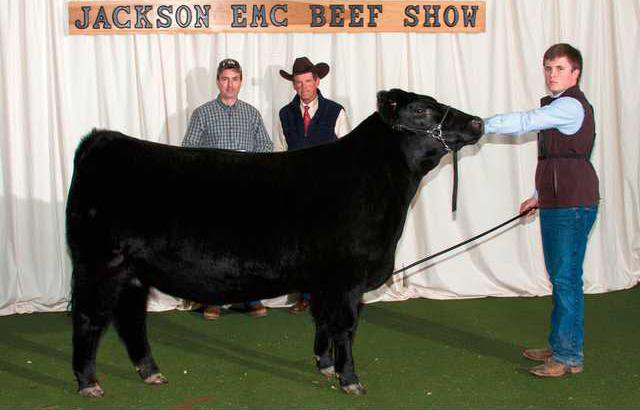 Hall student wins showmanship at beef show - Gainesville Times