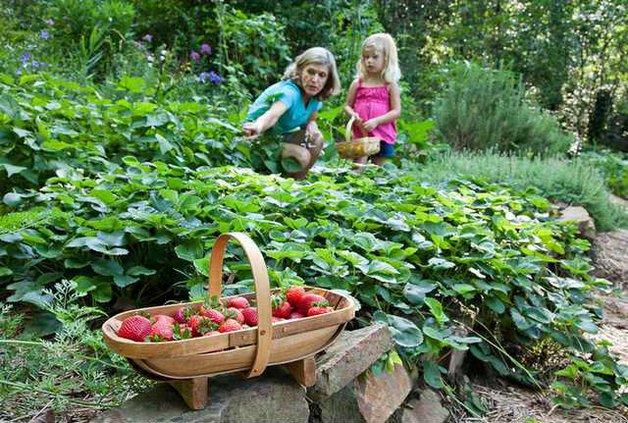 0412 GARDEN - strawberries