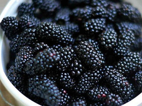0626blackberries1