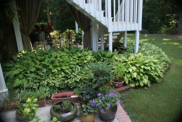 Bill Roper Garden 2012