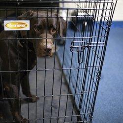 Drug-sniffing dog doing 'incredible' job for Hall schools