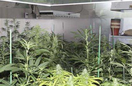 07072018 marijuana 1.jpg